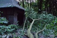 Nur knapp verfehlten diese Äste eine Schutzhütte im Rhododendronpark.