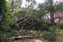 In Eitze stürzte ein kompletter Baum auf ein Wohnhaus und beschädigte das Dach erheblich.