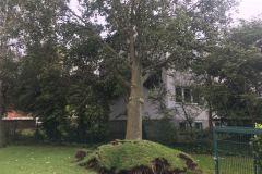 In der Allerstraße wurde ein Baum entwurzelt und prallte gegen ein Mehrfamilienhaus.