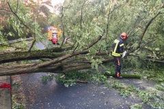 Vielfach waren Bäume auch auf Straßen und Schienen gestürzt und mussten durch die Einsatzkräfte entfernt werden.