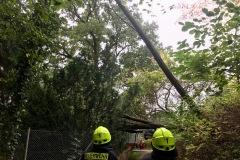 In Dauelsen waren zwei Bäume über einen Fußweg gestürzt.