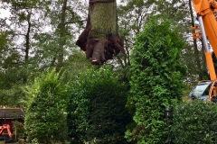 Ein kompletter Baum musste in Eitze mithilfe eines Kranes gefällt werden.