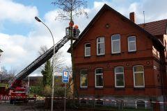 26.02.2016 - Baumfällarbeiten auf den Grundstücken Lindhooper Straße 50 und 48 im Rahmen eines Ausbildungsdienstes durch die Ortsfeuerwehr Verden.