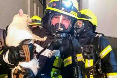 Feuerwehrleute retten eine Katze aus dem brennenden Gebäude.