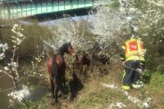 Pferde am Zaun.
