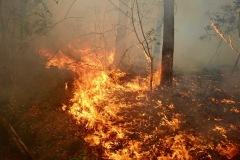 Feuer in einem Waldstück.