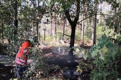 Löscharbeiten im Unterholz des Waldstückes.