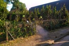 Der Heckenbrand konnte durch Anwohner mit einem Gartenschlauch schnell gelöscht werden, die Feuerwehr führte noch Nachlöscharbeiten durch.