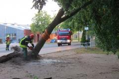 Ein Baum geriet an der Lindhooper Straße in Schräglage und wurde durch die Feuerwehr kontrolliert zu Fall gebracht.