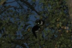 Hoch oben im Baum saß die junge Katze fest.
