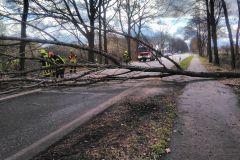 Der Baum blockierte die Achimer Straße vollständig, so dass es während der Räumungsarbeiten zu Verkehrsbehinderungen kam.