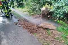 Einsatzkräfte löschen den Brand im Unterholz ab.