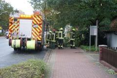 Baum auf Gehweg an der Hamburger Straße, mithilfe einer Bügelsäge und Muskelkraft konnte dieser schnell beseitigt werden.