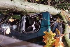 Das Fahrzeug wurde durch den Baum erheblich beschädigt.