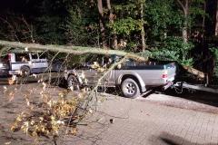 Der Baum war genau auf den Pickup gestürzt.