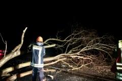 Auf der Achimer Straße kollidierte ein PKW mit einem auf der Fahrbahn liegenden Baum – verletzt wurde niemand, die Ortsfeuerwehr Dauelsen räumte die Fahrbahn.