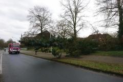 In Verden geriet ein Baum am Berliner Ring derart in Schieflage, dass er umzustürzen drohte und durch die Feuerwehr gefällt werden musste.