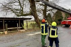 Ein großer Ast wurde durch Feuerwehr und Landesstraßenmeisterei entfernt.