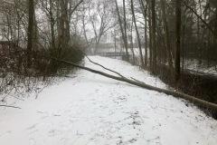 Baum auf einem Gehweg in Eitze.