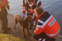Endlich an Land wurde der Hund erst einmal vom Rettungsdienst in Empfang genommen.
