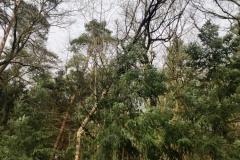 Abgebrochener Baum in der Eisseler Straße.