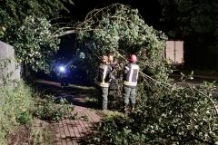Ein umgestürzter Baum musste am frühen Freitagmorgen an der Max-Planck-Straße beseitigt werden.